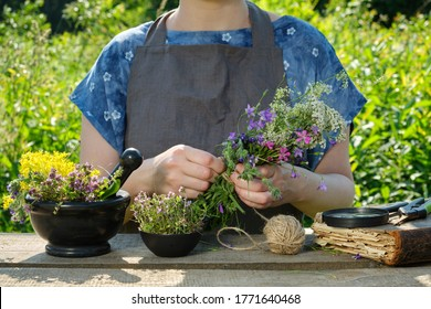 Woman harvesting medicinal plants. Herbalist holding in her hands bunch of medicinal herbs. In front of her is a mortar, bowl and a book.