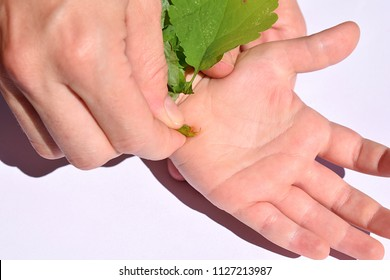 A woman heals a wart on the hand of a child with celandine juice
