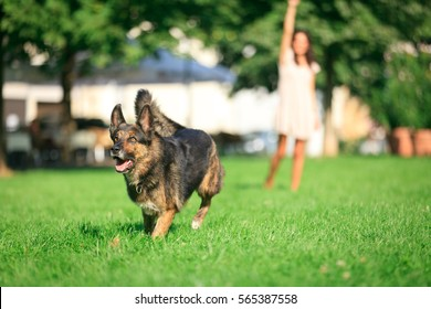 Woman With Her Dog In The Park