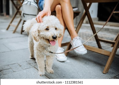 Woman and her dog spend time in street cafe