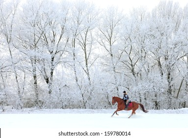 Woman and her horse cantering in fresh snow  in Christmas morning