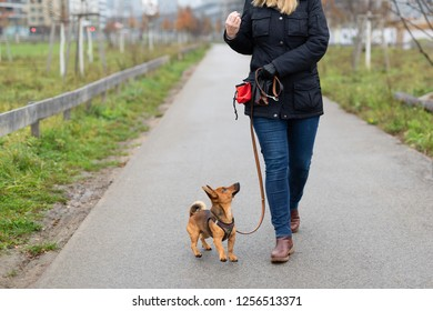 """A woman and her little dog are practicing """"walking to heel"""" in the park"""