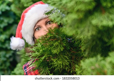 Woman hiding behind christmas tree. Girl with scared, open-eyed look in a santa claus hat looking out from the branches of juniper. Concept