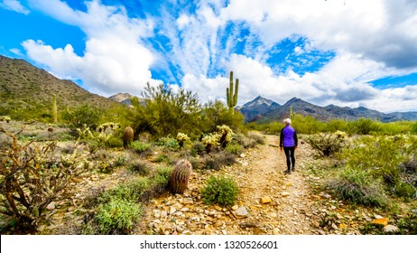 Woman hiking on the Levee Trail in McDowell Sonaran Preserve near Scottsdale, Arizona, United States of America