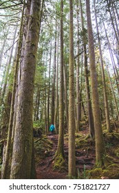 Woman hiking up a trail in the distance while among a forest of trees and moss on the Sunshine Coast in British Columbia, Canada.
