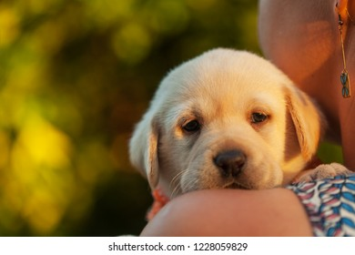Woman holding adorable labrador puppy dog close to her face - closeup, shallow depth of field