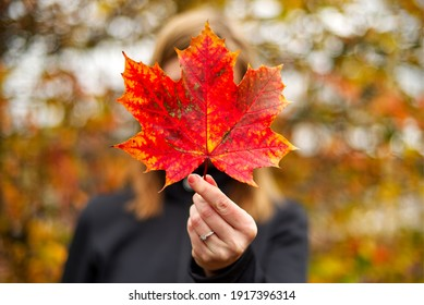 Woman holding an autumn (fall) leaf in the forest, obscuring her face.