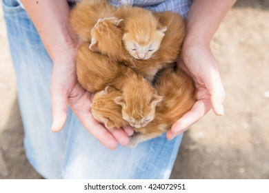 woman holding a baby four kittens