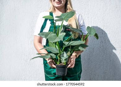Woman holding big filodendron plant with silver leaves.