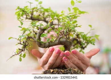 A woman is holding a bonsai tree.