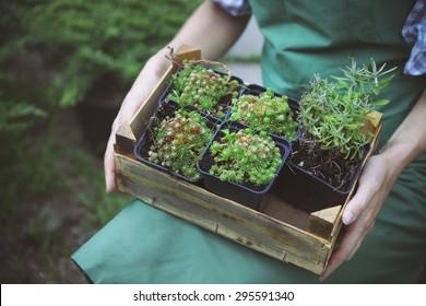Woman holding a box with plants in her hands in garden center. Close up