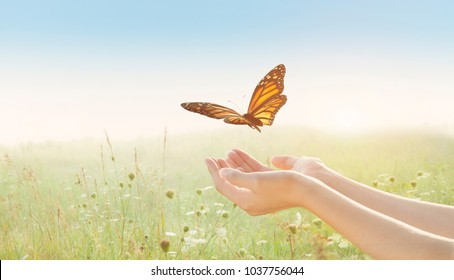 Woman holding butterfly and releasing over a field of wildflowers and a sunset sky