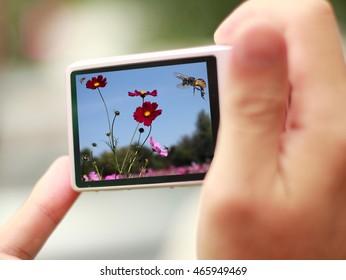 woman holding camera selective focus at camera screen