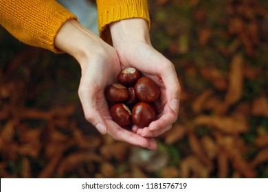Woman holding chestnuts in her hands.