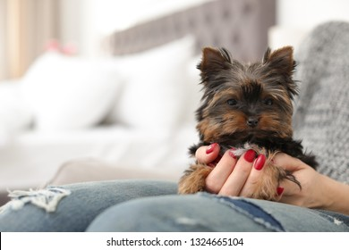Woman holding Cute Yorkshire terrier puppy, closeup with space for text. Happy dog