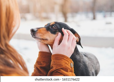 Woman holding a dachshund in her hands. Loving dogs concept: enjoying free time at a walk outdoors