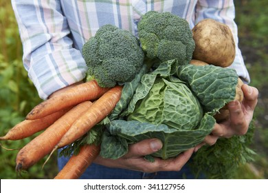 Woman Holding Fresh Produce Dug From The Garden