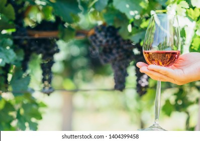 Woman holding glass of red wine in vineyard field. Wine tasting in outdoor winery. Grape production and wine making concept.