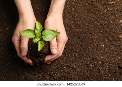Woman holding green seedling on soil, top view. Space for text - Shutterstock ID 1425293069