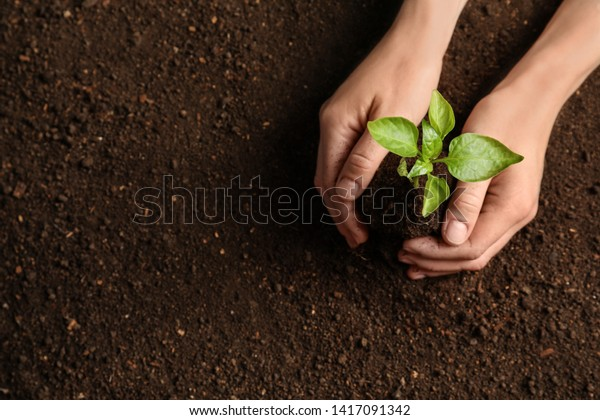 Woman holding green seedling on soil, top view. Space for text