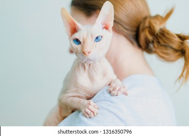 Woman holding hairless cat Don Sphynx breed with pink naked skin on her shoulder.