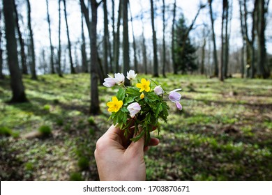 Woman holding in hand anemone nemorosa flowers in the green forest in the sunny day. Wood anemone, windflower, thimbleweed. Purple and white flowers, early spring forest landscape.