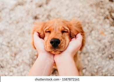 woman holding head of cute puppy cocker spaniel dog. love for animals concept
