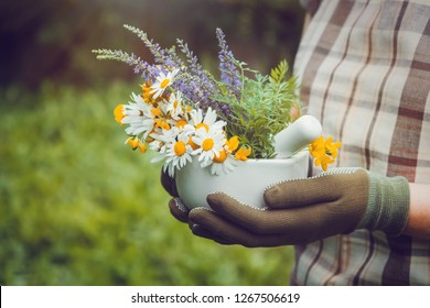 Woman holding in her hands a mortar of healing herbs. Herbalist collects medicinal plants on a meadow.