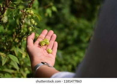 Woman holding hop outside