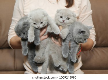 A woman is holding a lot of kittens