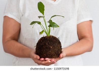 A woman holding a kokedama plant