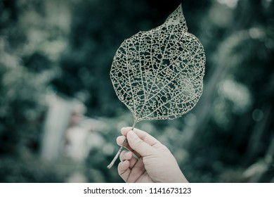 Woman holding leaf with hole