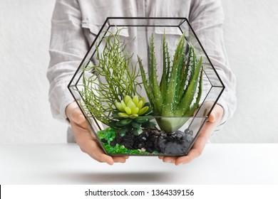Woman holding mini succulent garden in glass florarium, closeup