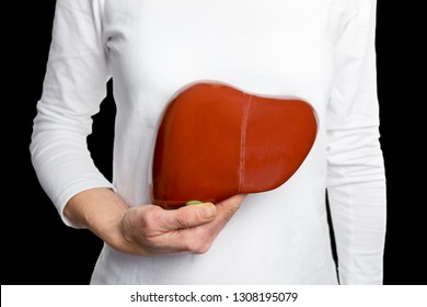 Woman holding model human liver  at white body isolated on black background