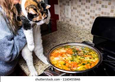 Woman holding one naughty mischief guilty curious calico cat by homemade vegetable soup on counter top in kitchen, hot steam