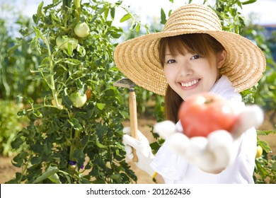 Woman holding out the tomatoes from field