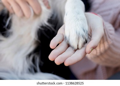 A woman holding the paw of her dog outdoor at a park in summer time representing love, friendship, training, companionship, teamwork or other concepts in a natural background