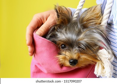Woman holding pink bag with Adorable Yorkshire terrier on yellow background, closeup. Cute dog