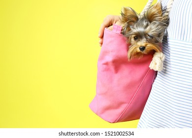 Woman holding pink bag with Adorable Yorkshire terrier on yellow background, space for text. Cute dog