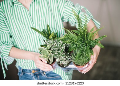 Woman holding pot of flowers, concept, lifestyle