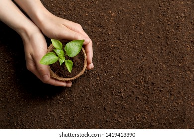 Woman holding pot with seedling on soil, top view. Space for text