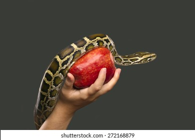 A woman is holding a red apple on which a snake is climbing.