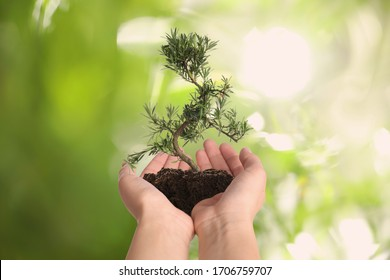 Woman holding small tree in soil on blurred green background, closeup. Ecology protection