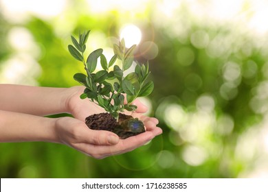 Woman holding small tree in soil on blurred background, closeup. Ecology protection