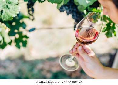 Woman holding  and smelling glass of red wine in vineyard field. Wine tasting in outdoor winery. Grape production and wine making concept.