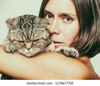 A woman is holding a thoroughbred Scottish fold cat that has released claws. Close-up.