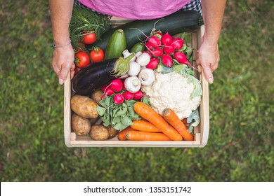 Woman is holding wooden crate full of vegetables from organic garden. Harvesting homegrown produce. Top view