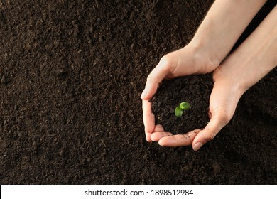 Woman holding young green seedling in soil, top view. Space for text