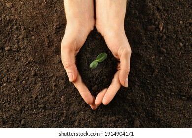 Woman holding young green seedling in soil, top view - Shutterstock ID 1914904171