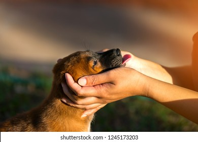 Woman holds dog's head in her hands.Dog tongue.